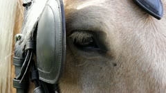 Horse eye plinking leather. Stock Footage