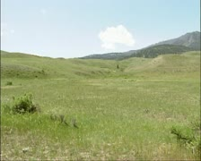 Pronghorn, Antilocapra americana roaming at american prairie  Stock Footage