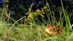 Autumn in the forest - stock footage