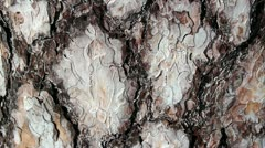 Pine bark brown bark bugs forest Stock Footage
