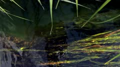 Grass under the water - stock footage
