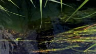 Stock Video Footage of Grass under the water