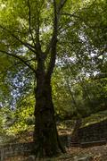 Beneath view of a very tall tree in the forest. Stock Photos