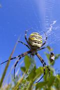 spider. summer.  sky.  web.  herb. - stock photo