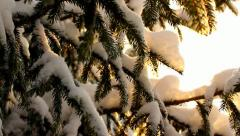 Snow on fir branches in winter, from below, looking above Stock Footage