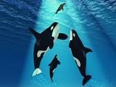 Stock Illustration of killer whales