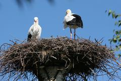 Nature art biological birds nest natural outdoor Stock Photos