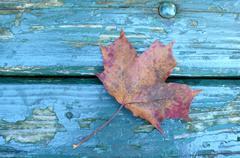 art leaf agrar autumn color colorful dye end - stock photo