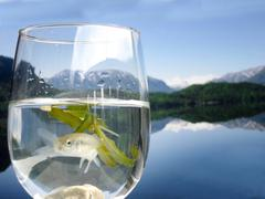 Water nature fish animal biological energy idyll Stock Photos
