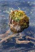 Water nature ecology energy high moss natural Stock Photos