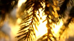 Spruce branches with snow close-up, sunlight Stock Footage