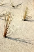 Beach water bank coast sand grass binz blades Stock Photos