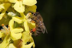 flower bee bug green yellow animal bloom field - stock photo