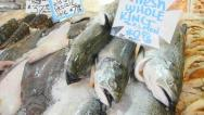 Stock Video Footage of Daily Catch Fresh Fish