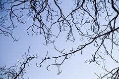 intricacy on tree branches - stock photo