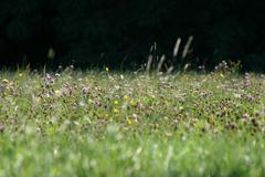flower summer field meadow grass land in open - stock photo