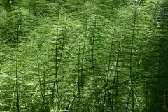 Nature fern green poto primeval forest ferns Stock Photos