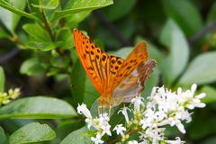 Kukka perhonen luonne eläinten maailmaan kukkiva lentää Kuvituskuvat