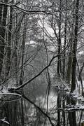 water tree winter calm grey quiet quietness - stock photo