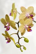 Stock Photo of flower beauty beautiful closeup exotic expensive