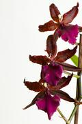 Flower beauty beautiful exotic green lilac red Stock Photos