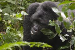 Adventure ape horizontal mountain national park Stock Photos