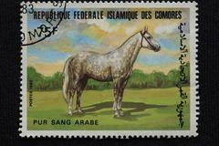 design horse closeup collection colour cost - stock photo