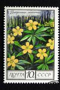 Flower design closeup collection colour cost Stock Photos