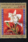 flower design closeup collection colour cost - stock photo