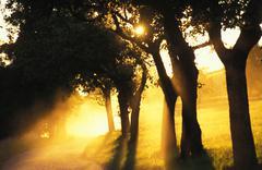 Tree dusk sunset sky sunny vegetation mood airy Stock Photos