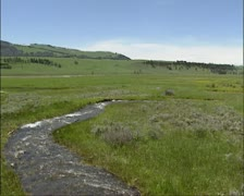 Creek, meltwater streaming in pasture, Lamar Valley Stock Footage