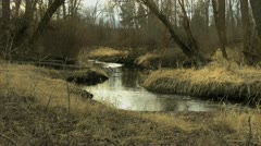 Moody, gothic woods and creek Stock Footage