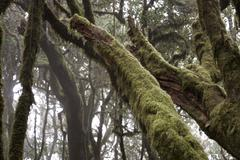 Laurisilva forest la gomera africa african Stock Photos