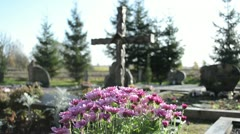 Chrysanthemums flowers grow new grave cemetery monuments cross Stock Footage