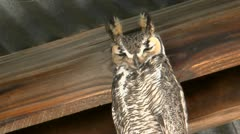 Owl Perches In Barn Stock Footage