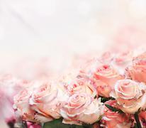 Roses bouquet Stock Photos
