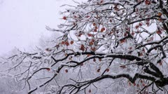 Shirakawago Persimmons On Tree And Falling Snow Stock Footage