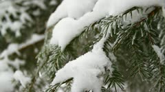 Snow on twigs in the forest, close-up, frost Stock Footage