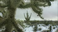Stock Video Footage of Snow Melt Thorny Cactus Scenic