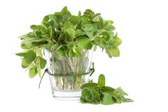 marjoram leaves - stock photo