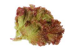 fresh tasty greens - stock photo