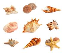 set of seashells - stock photo