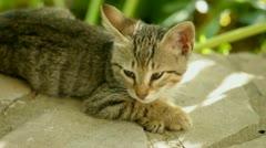 sleepy cat - stock footage