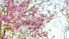 Pink branches Stock Footage