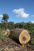 lumber industry - stock photo