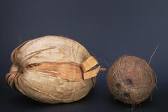 Tree food fruit cocos nucifera coconut palm Stock Photos