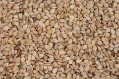 Background sesamum indicum sesame lot abundant Stock Photos