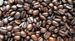 food coffee coffea spec rubiaceae plant plants - stock photo