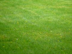 Stock Photo of green lawn park lawns monochrome color colour