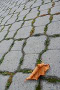 leaf autumnal pavement afflicted alone autumn - stock photo